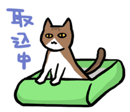 The Sticker of my cat sticker #2120256