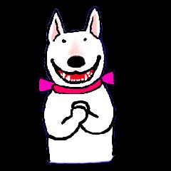Miss HANA of bull terrier