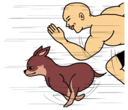 Physial Beauty!! Muscle Chihuahua!! sticker #2162050