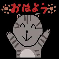 Japanese cat named Kijitora