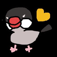 Java sparrow 1