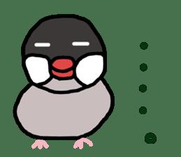 Java sparrow 1 sticker #2193872