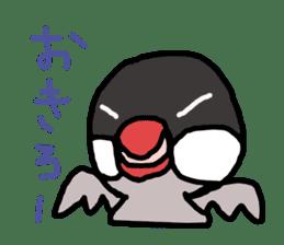 Java sparrow 1 sticker #2193903