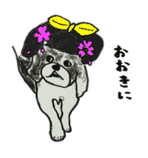I am Shih Tzu sticker #2199912