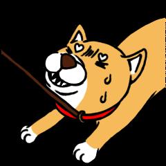 Japanese dog Mofro 1000%