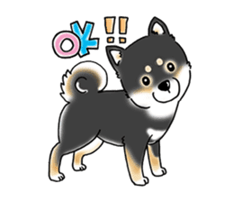 "Shiba Inu ""Hanapi"" & ""Kinako"" body type sticker #2272065"