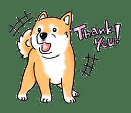 "Shiba Inu ""Hanapi"" & ""Kinako"" body type sticker #2272072"