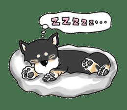 "Shiba Inu ""Hanapi"" & ""Kinako"" body type sticker #2272073"