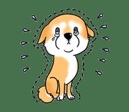 "Shiba Inu ""Hanapi"" & ""Kinako"" body type sticker #2272080"