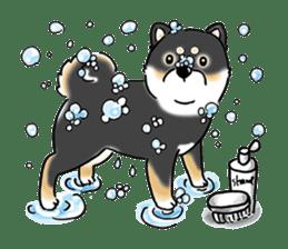 "Shiba Inu ""Hanapi"" & ""Kinako"" body type sticker #2272095"