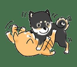 "Shiba Inu ""Hanapi"" & ""Kinako"" body type sticker #2272096"
