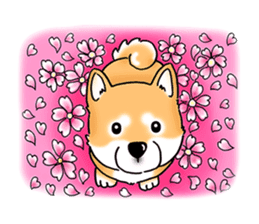 "Shiba Inu ""Hanapi"" & ""Kinako"" body type sticker #2272100"