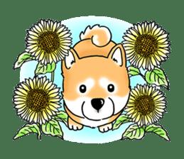 "Shiba Inu ""Hanapi"" & ""Kinako"" body type sticker #2272101"