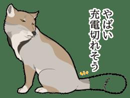 Tibetan sand fox stickers! sticker #2278134
