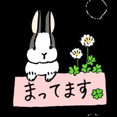 polite bunnies
