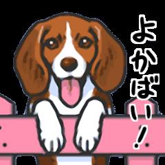 Kawaii Animals (Cute Animals of Kyushu)