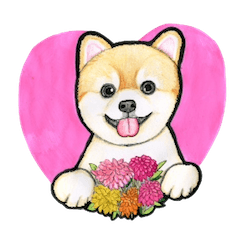 Heart-warming Pomeranian Sticker