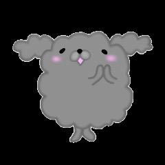Fluffy poodle