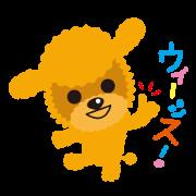 สติ๊กเกอร์ไลน์ Nowadays of Toy poodle