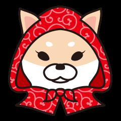 Shiba Inu to wear a hood
