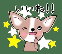Talkative Smooth Coat Chihuahua PART2 sticker #2416872