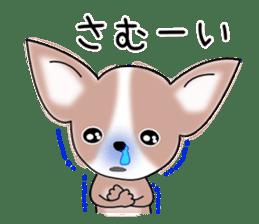 Talkative Smooth Coat Chihuahua PART2 sticker #2416890