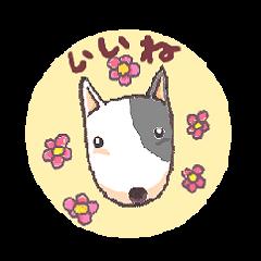 Bull terrier(DAIFUKU)