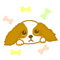 Loose Cute Cavalier King Charles Spaniel