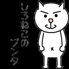 Bunta of White cat