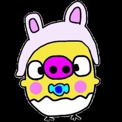 Pig chick