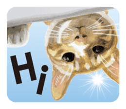 Cats, nothing special, in English sticker #2560366