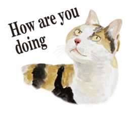 Cats, nothing special, in English sticker #2560369