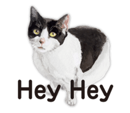 Cats, nothing special, in English sticker #2560371