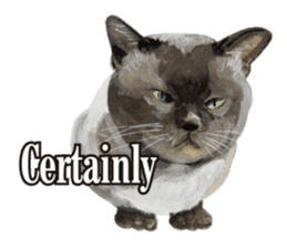 Cats, nothing special, in English sticker #2560376