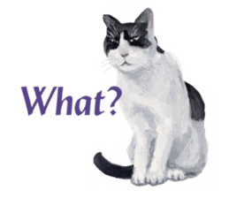 Cats, nothing special, in English sticker #2560387