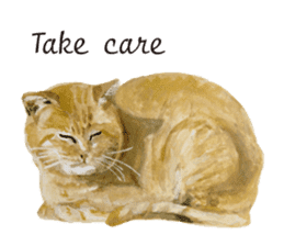 Cats, nothing special, in English sticker #2560389