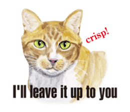 Cats, nothing special, in English sticker #2560391