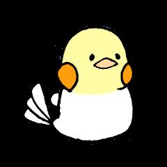 Small bird Life