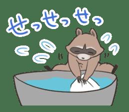 common raccoon sticker #2604888
