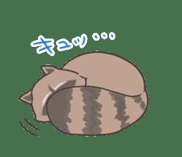common raccoon sticker #2604899