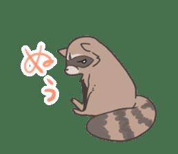 common raccoon sticker #2604901