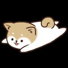 Pupi Dog