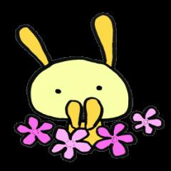 it's Rabbit