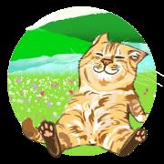 สติ๊กเกอร์ไลน์ Meow Meow Cats2