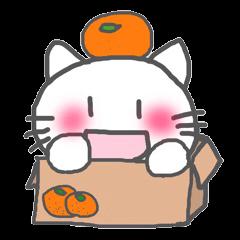 Enshu Dialect Cat
