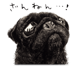 Boku Pug sticker #2715477