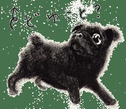 Boku Pug sticker #2715486