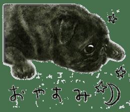 Boku Pug sticker #2715506