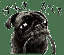 Boku Pug sticker #2715510