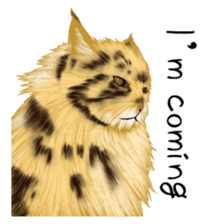 real cats(Eng ver.) sticker #2715573